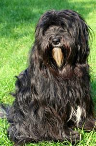 Hund Frauluna