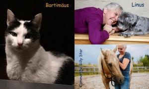 Kerstin Rachfahl_Collage Haustiere
