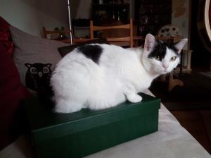 Bookworm_Box_April_2
